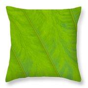 Close Up Of Taro Leaf Throw Pillow