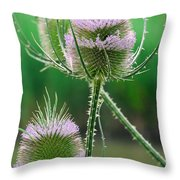 Close Up Of Teasel Blossoms Revealing Throw Pillow