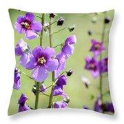 Close Up Of Verbascum Phoeniceum Throw Pillow