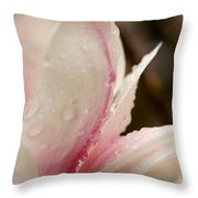 Close-up Of Water Drops On Pink Throw Pillow