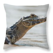 Close-up Of Yacare Caiman On Sandy Beach Throw Pillow
