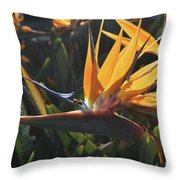 Close Up Photo Of A Bee On A Bird Of Paradise Flower  Throw Pillow