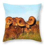 Close Up Portrait Group Of Big Bighorn Mountain Sheep Rams Throw Pillow