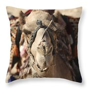 Close-up Portrait Of A Camel Throw Pillow