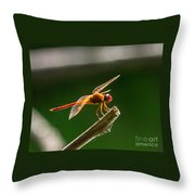 Close Up Red Dragonfly Throw Pillow