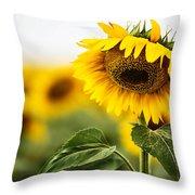 Close Up Single Sunflower In South Dakota Throw Pillow