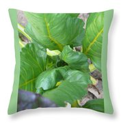 Close Up With Chard Throw Pillow