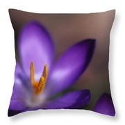 Close View Of A Purple African Violet Throw Pillow