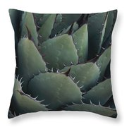 Close View Of An Agave Plant Throw Pillow