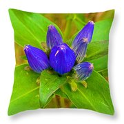 Closed Gentian Closeup In Campground In Saginaw-minnesota Throw Pillow