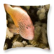 Closeup Of A Freckled Hawkfish Throw Pillow