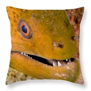 Closeup Of A Giant Moray Eel Throw Pillow