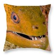 Closeup Of A Giant Moray Eel Throw Pillow