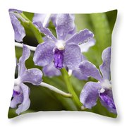 Closeup Of A Hybrid Cultivated Orchid Throw Pillow