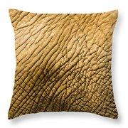 Closeup Of An African Elephant Throw Pillow