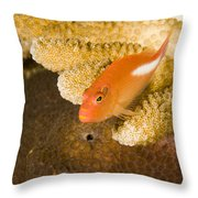 Closeup Of An Arc-eye Hawkfish Throw Pillow