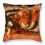 Closeup Of An Ocellated Lionfish Throw Pillow
