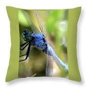 Closeup Of Blue Dragonfly Throw Pillow