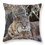 Closeup Of Bobcat Throw Pillow