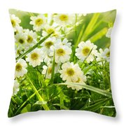 Closeup Of Daisies In Field Throw Pillow