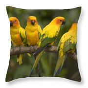 Closeup Of Four Captive Sun Parakeets Throw Pillow