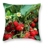 Closeup Of Fresh Organic Strawberries Growing On The Vine Throw Pillow