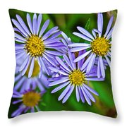 Closeup Of Leafy Bract Asters On Iron Creek Trail In Sawtooth National Wilderness Area-idaho  Throw Pillow