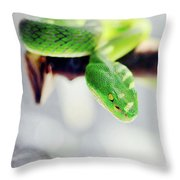 Closeup Of Poisonous Green Snake With Yellow Eyes - Vogels Pit Viper  Throw Pillow