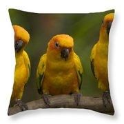 Closeup Of Three Captive Sun Parakeets Throw Pillow
