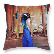 Closeup Portrait Of A Peacock Peafowl Throw Pillow