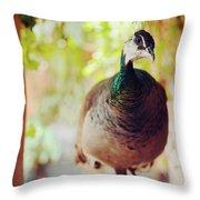 Closeup Portrait Of A Peafowl Throw Pillow