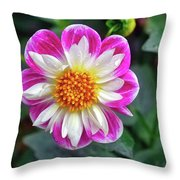 Closeup View Of A Dahlia That Was In The Cesky Krumlov Castle Gardens Throw Pillow