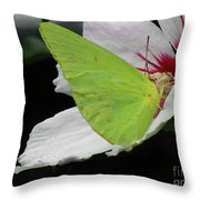 Cloudless Giant Sulphur Butterfly  Throw Pillow