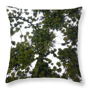 Cloudy Skies Through Maple Throw Pillow
