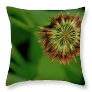 Clover Past Due Throw Pillow