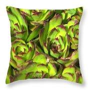 Clustered Succulents Throw Pillow