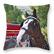 Clydesdale At Esp Throw Pillow