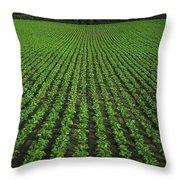 Co Tipperary, Ireland Sugar Beet Throw Pillow