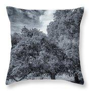 Coast Live Oak Monochrome Throw Pillow