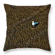 Coast - The Glowing Gull Throw Pillow