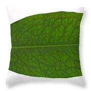 Coca Leaf, Erythroxylon Coca Throw Pillow