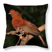 Female Cock Of The Rock Throw Pillow