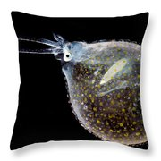 Cockatoo Squid Throw Pillow