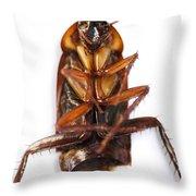 Cockroach Carcass Throw Pillow