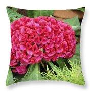 Cockscomb Flower Throw Pillow