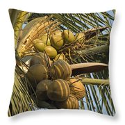 Coconuts Cluster At Los Tules Resort Throw Pillow