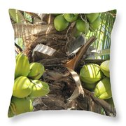 Coconuts Throw Pillow