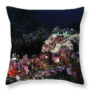 Cocos Island Octopus Hiding On Reef Throw Pillow