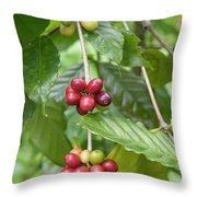 Coffea Coffee Growing In The Balinese Countryside. Throw Pillow