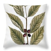 Coffee Plant, 1735 Throw Pillow